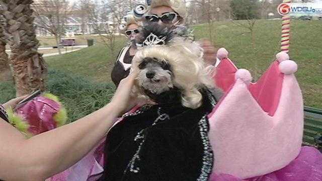 Carnival goes to the dogs at the Krewe of Barkus
