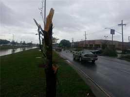 Tree snapped on Veterans