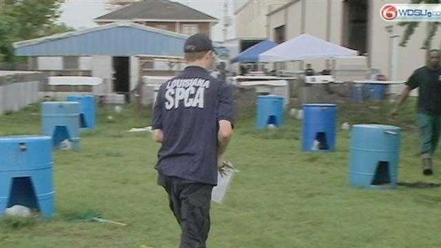 Officials investigate 2 animal cruelty cases