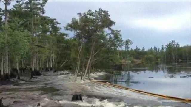 Louisiana sinkhole swallows trees