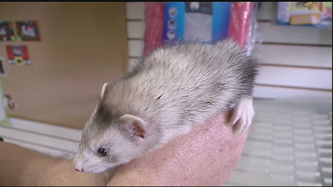 A woman caught on camera stealing a ferret from a Northshore pet store returned the animal after she was seen on surveillance video, deputies said.