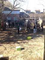 The Audubon Zoo on Thursday celebrated the 50th birthday of its Asian elephant Panya.