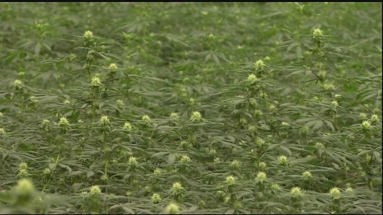 Jefferson Parish leaders hold marijuana town hall meeting