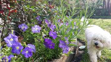 Many flowers are beginning to fade in May as we heat up. I generally plant my Summer Garden in May -- sometimes April.