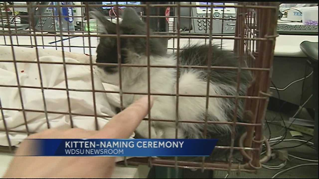 The WDSU Kitten has been named