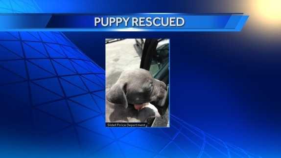 Puppy rescued edit.jpg