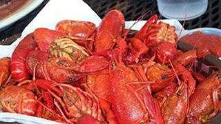 Crawfish - 18731577