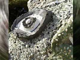 Where in the Disney Parks can you find this eye? Look closely!