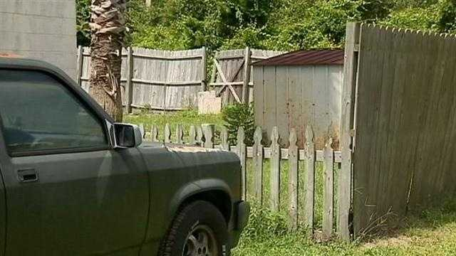 Black bear kills dog near DeLand
