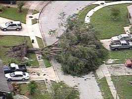 A fallen tree blocks a street in Orlando.