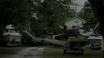 Large oak tree down in Daytona Beach.