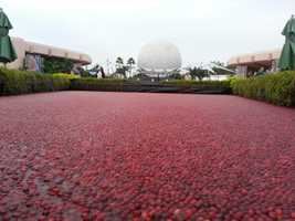 If you've been to the Epcot International Food and Wine Festival this year, you've noticed for the second year in a row, Ocean Spray brought back the cranberry bog.