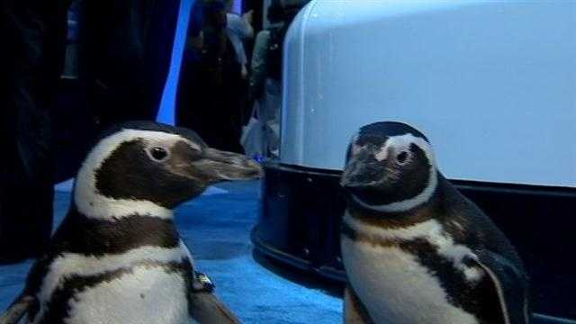SeaWorld shows off newest attraction
