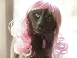 Kitty Wig- Fur real! There's a website that caters to all your kitty wig needs.