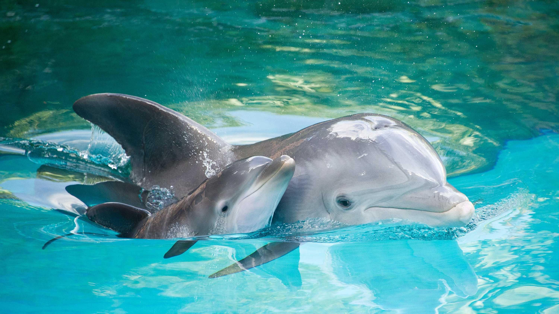 Dolphin born.jpg