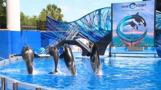 SeaWorld attracting interest for buyout