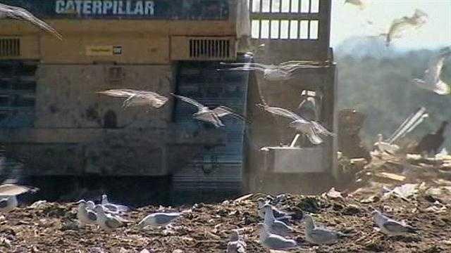 Bird watchers flock to Brevard County dump