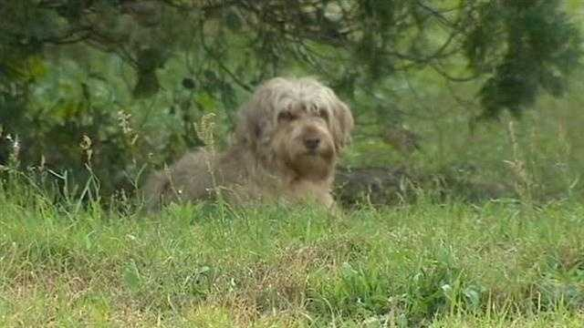 A group of east Orange County residents said they want something done about a group of dogs allowed to run wild and kill their animals.