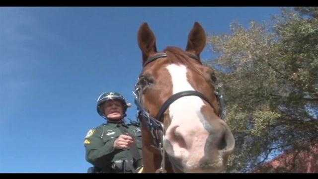 The Orange County Sheriff's Office needs help, but not solving a crime, this time they need help naming a horse.
