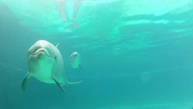 DolphinBorn7