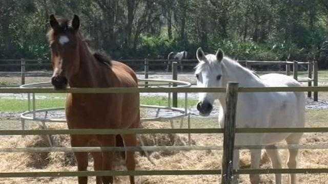 A Brevard County woman is suing after she says her horses were sold without her permission.