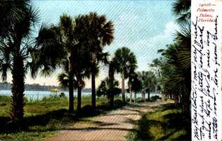 In 1907, the postcard shows Palmetto Palms.