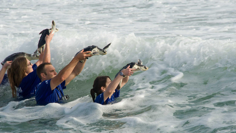 20130410_Sea Turtle Release_29