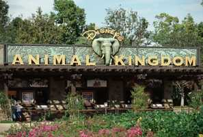 Animal Kingdom celebrated its 15th anniversary on April 22, 2013, which was also Earth Day.  Take a look at what Animal Kingdom has to offer.