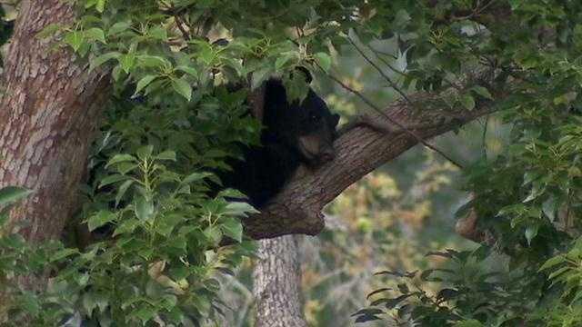 sleeping bear.jpg