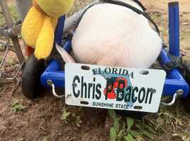 He outgrew his wheelchair that was made of K'nex toys. Now, he has a new one with its own license plate.