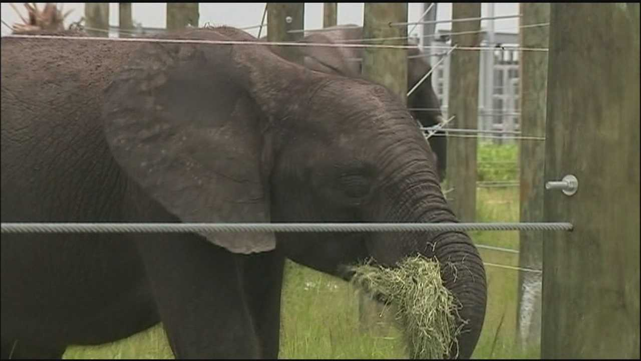 Elephant 'retirement home' opens in Indian River County