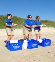 Three Kemp's Ridley sea turtles were released back into the ocean Thursday after being rehabilitated at SeaWorld Orlando for several months.