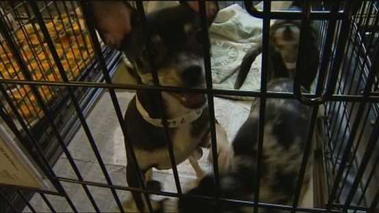 Dozens of dogs removed from filthy living conditions in a home have been adopted by new families.