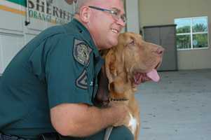 The newest member of the Orange County Sheriff's Office is just 18 months old but is expected to be a top dog once he has a little training.