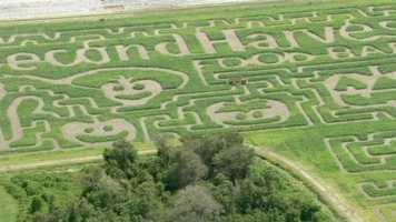 Long and Scott Farms are marking their popular corn maze's 50th anniversary with a special purpose this year.