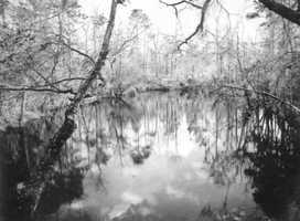 A river sinkhole near Wakulla County, Fla. in 1943.