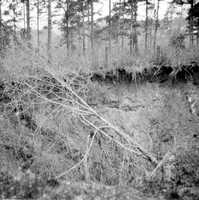 A sinkhole on the Beadel property, north of Lake Iamonia, Leon County in 1949.