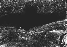 A limestone sinkhole at Addison Hammock, Cutler, Fla. in 1916.