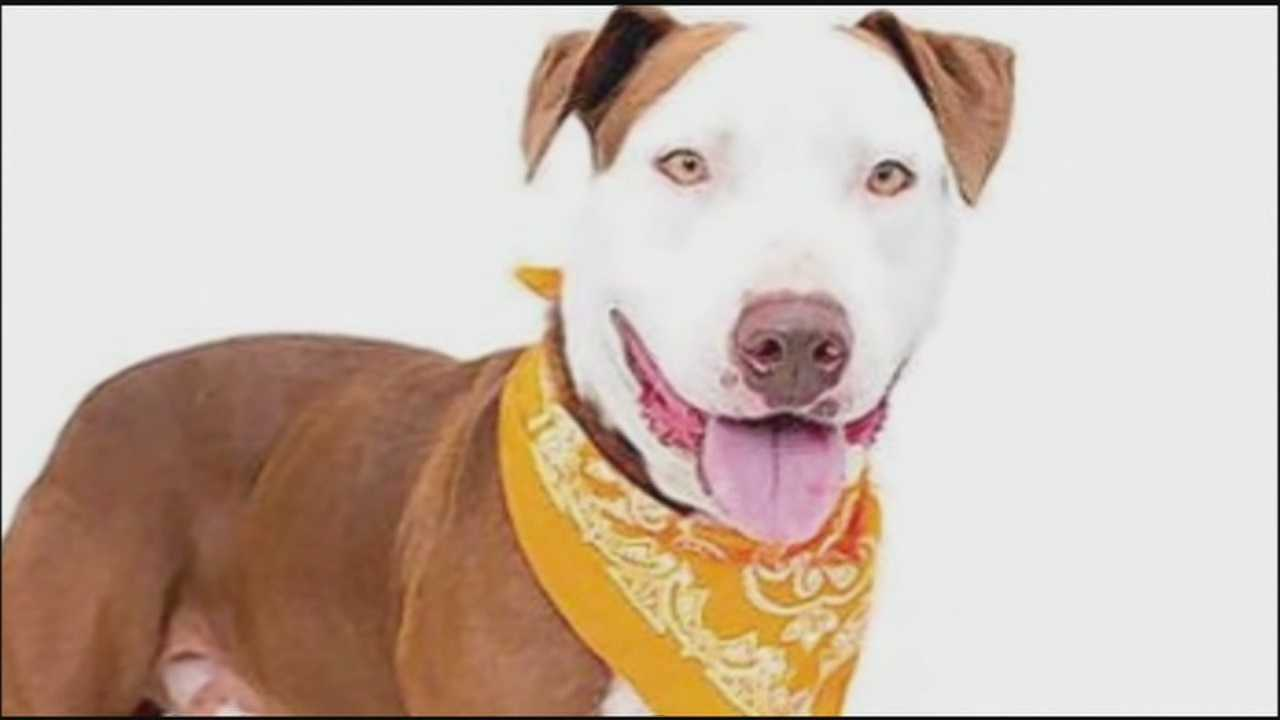 Orange County leaders heard proposed changes to the county's animal services after a dog was accidentally euthanized earlier this year.