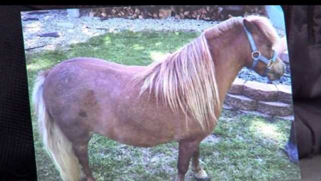 Thieves stealing horse hair
