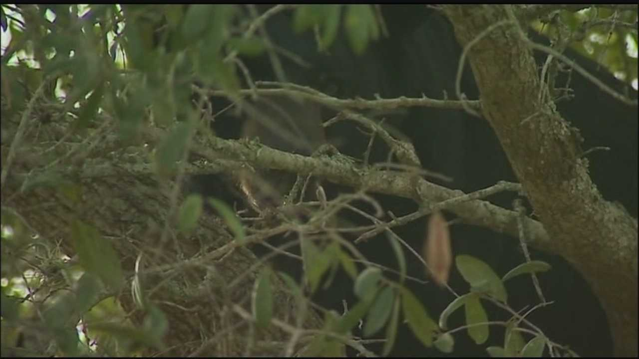 Roaming bear prompts reminder from wildlife officials