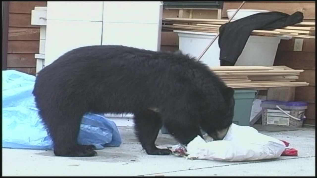 img-Seminole County exploring grant for bear-resistant trash cans