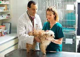 36. Veterinary Assistants and Laboratory Animal Caretakers - $21,880