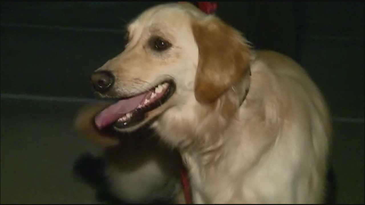 Deputies say a 75-year-old neighbor stole Dumpling, the dog who vanished on Feb. 5.