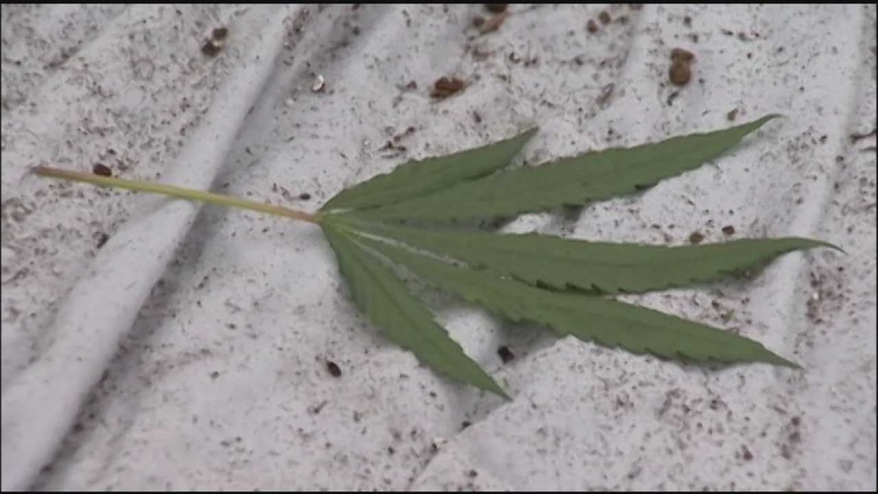 Osceola County Sheriff's Office deputies discovered what appears to be a marijuana grow house on the border of Osceola and Orange counties Thursday, according to Sheriff's Office Spokeswoman Twis Lizasuain.
