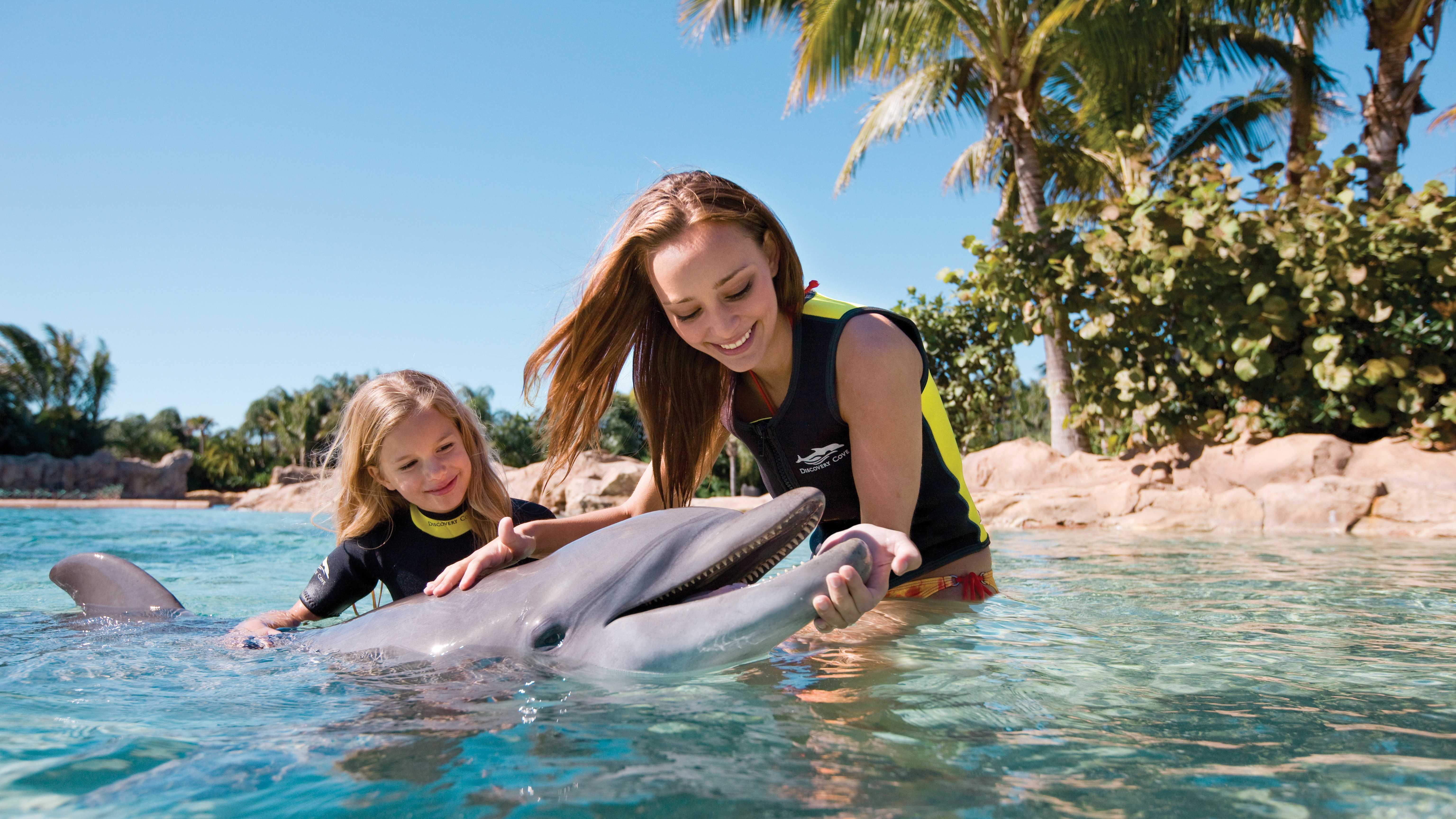 Dolphin Interaction.jpg