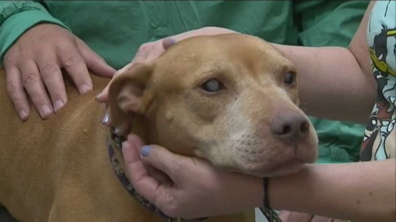 Dumpster dog gets new vision with cataracts surgery