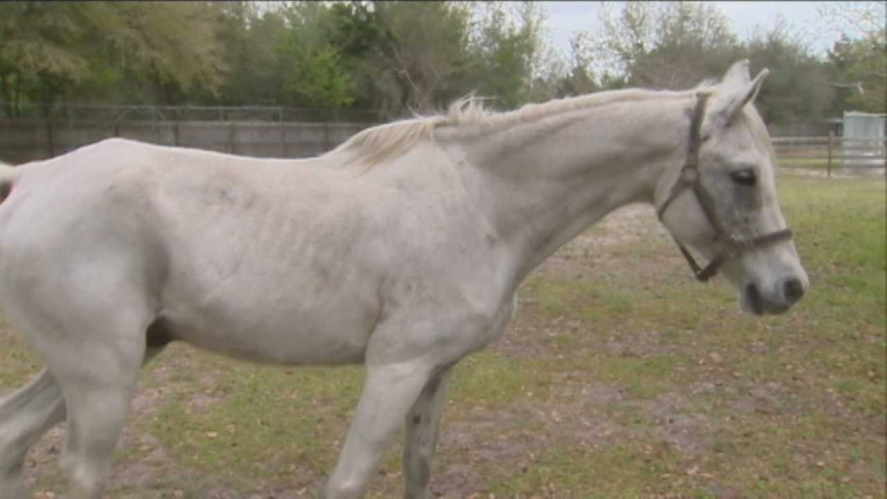 Abandoned horse will soon be up for adoption