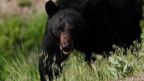 Sem Co bear.jpg