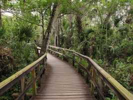 Big Cypress Swamp in Southwest Florida is more than 729,000 acres and is home to a variety of wildlife including the Florida panther. It has temperate and tropical plants and freshwater, making it essential to the health of its neighbor, the Everglades.>> Download the Orlando My Way app for iOS | Android